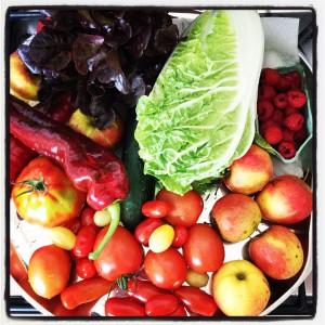 Groentepakket 10 juni 2015 met Chinese kool
